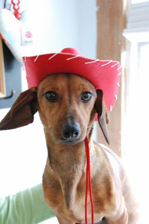 Cowgirl rosie 009 [1024x768]