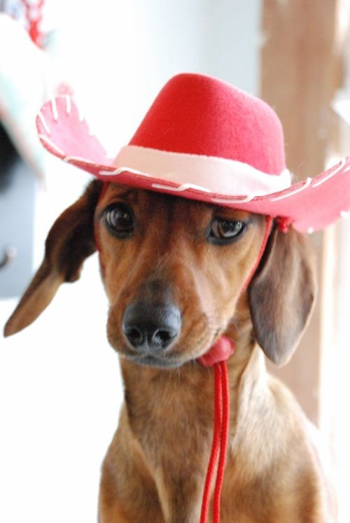 Cowgirl rosie 022 [1024x768]