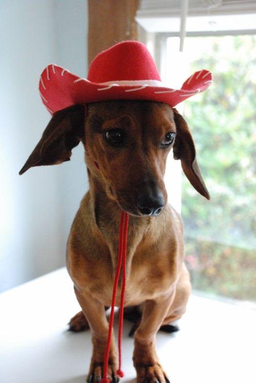 Cowgirl rosie 037 [1024x768]