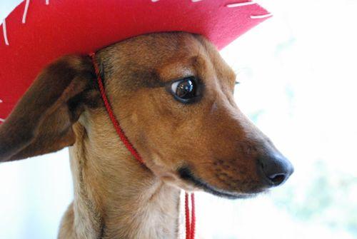 Cowgirl rosie 007 [1024x768]
