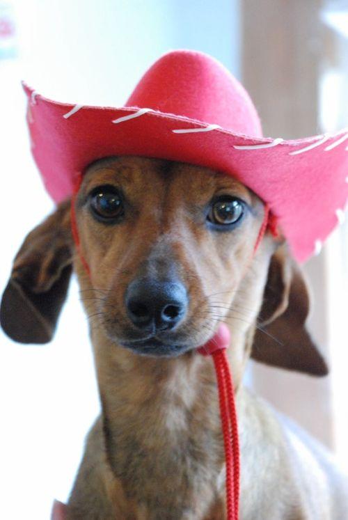Cowgirl rosie 026 [1024x768]