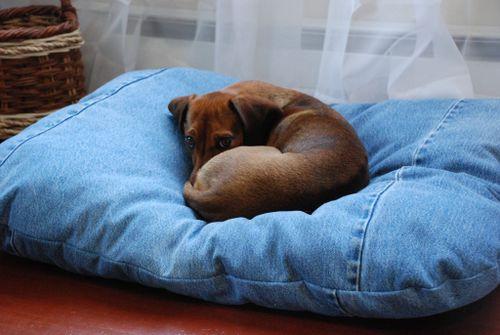 Rosie bed 011 [1024x768]
