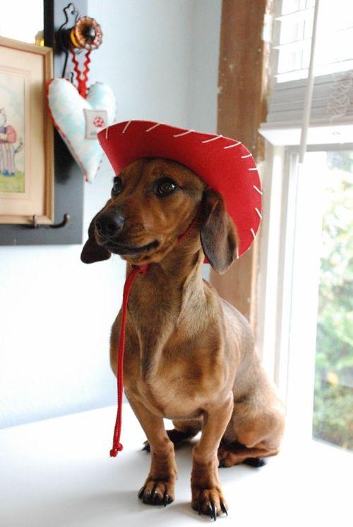 Cowgirl rosie 055 [1024x768]