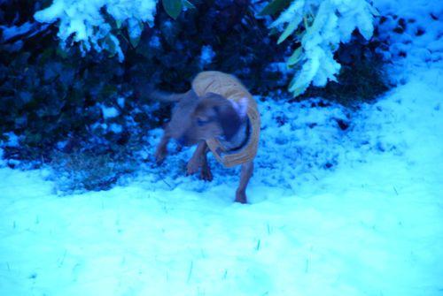 Porch snow 043 [1024x768]