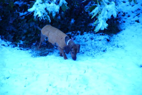 Porch snow 039 [1024x768]