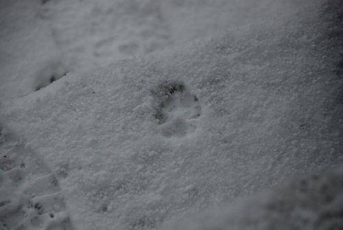 Snow day 029 [1600x1200]