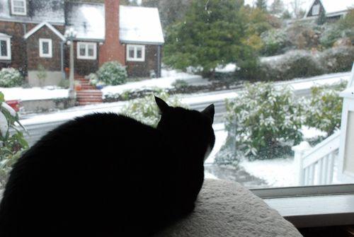 Snow day 073 [1600x1200]