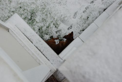 Snow day 013 [1600x1200]