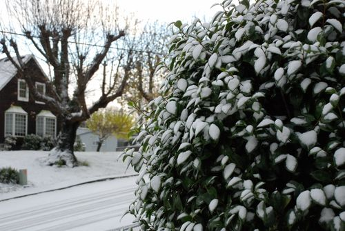 Snow day 031 [1600x1200]